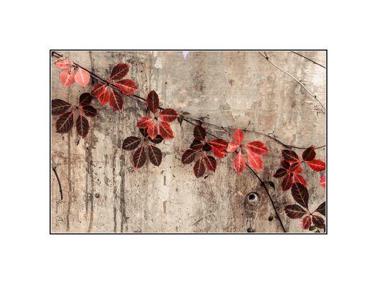 Flores de Sangre...