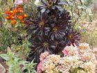 flores de traspatio