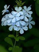 Flores del meditarraneo
