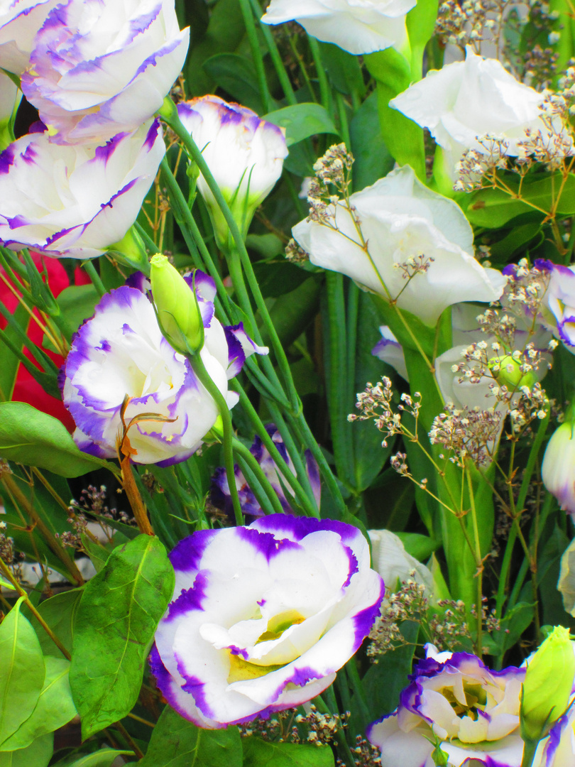 flores del santuario