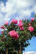 flores en el cielo