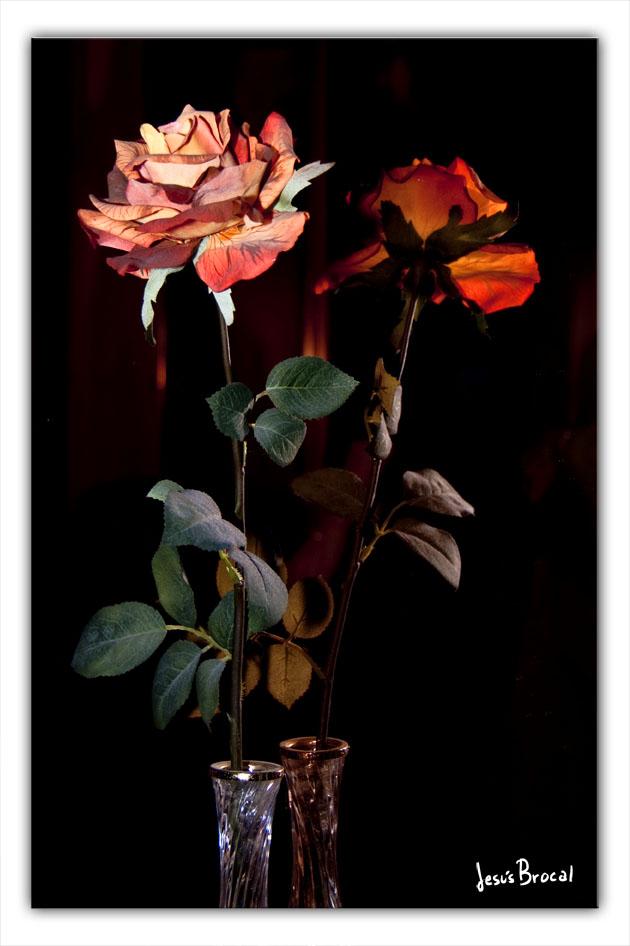 Flores en el espejo