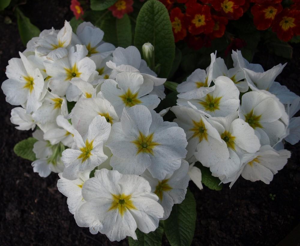 Flores en el parque...