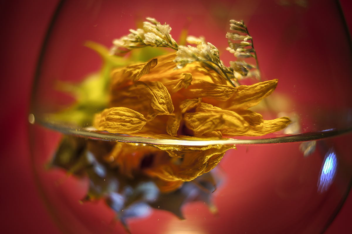 """""""Flores en el vaso"""" lll"""
