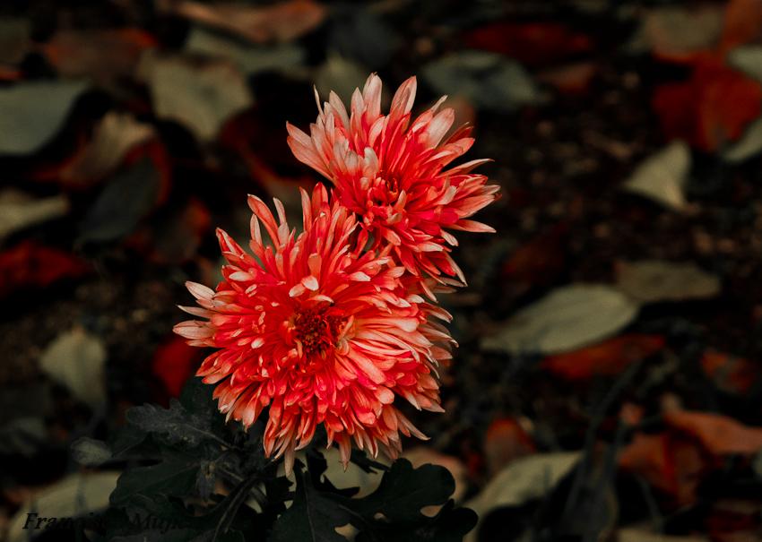 ...Flores en invierno...