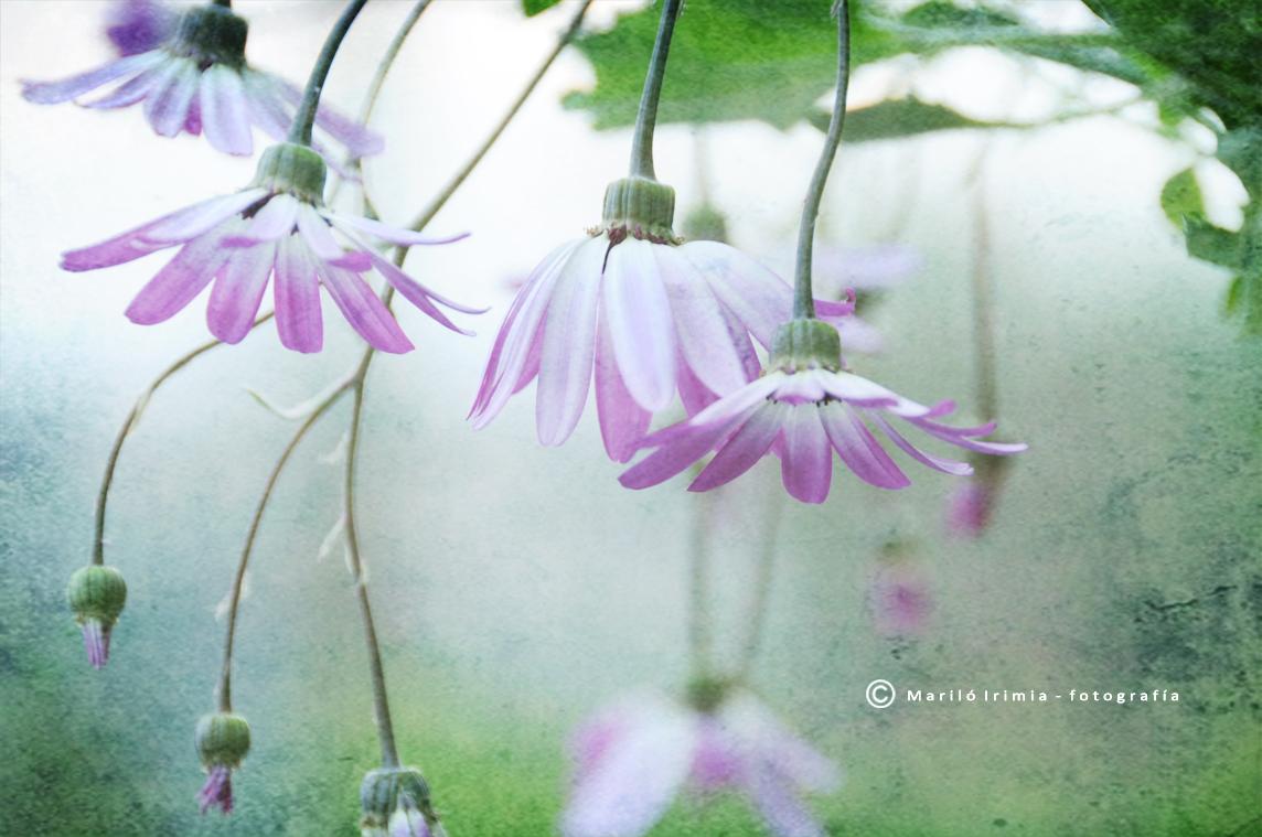 Flores en la adversidad ...
