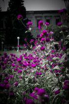 Flores en la plaza