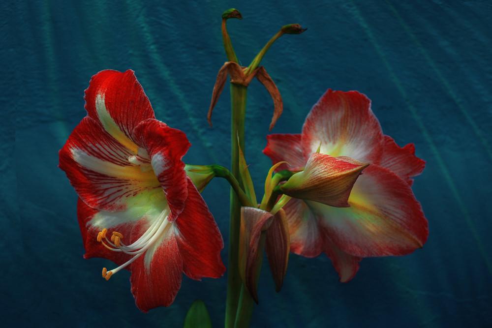 """""""Flores en la sombra"""" l"""
