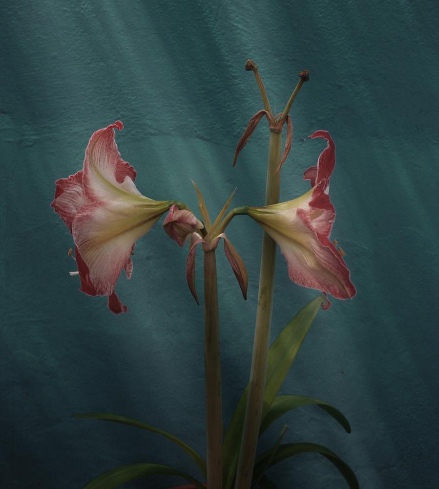 """""""Flores en la sombra"""" ll"""