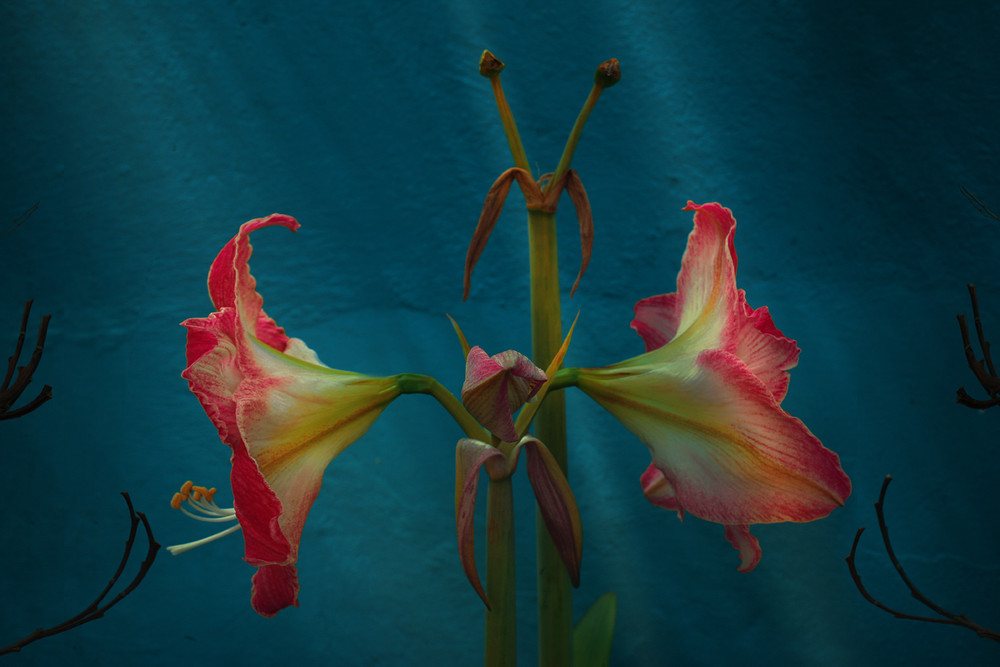 """Flores en la sombra"" lll"