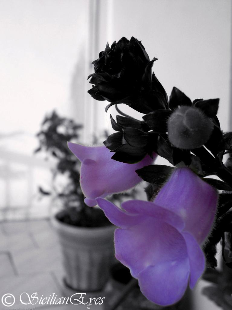 Flores en lila...