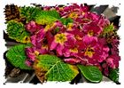 Flores para el Recuerdo