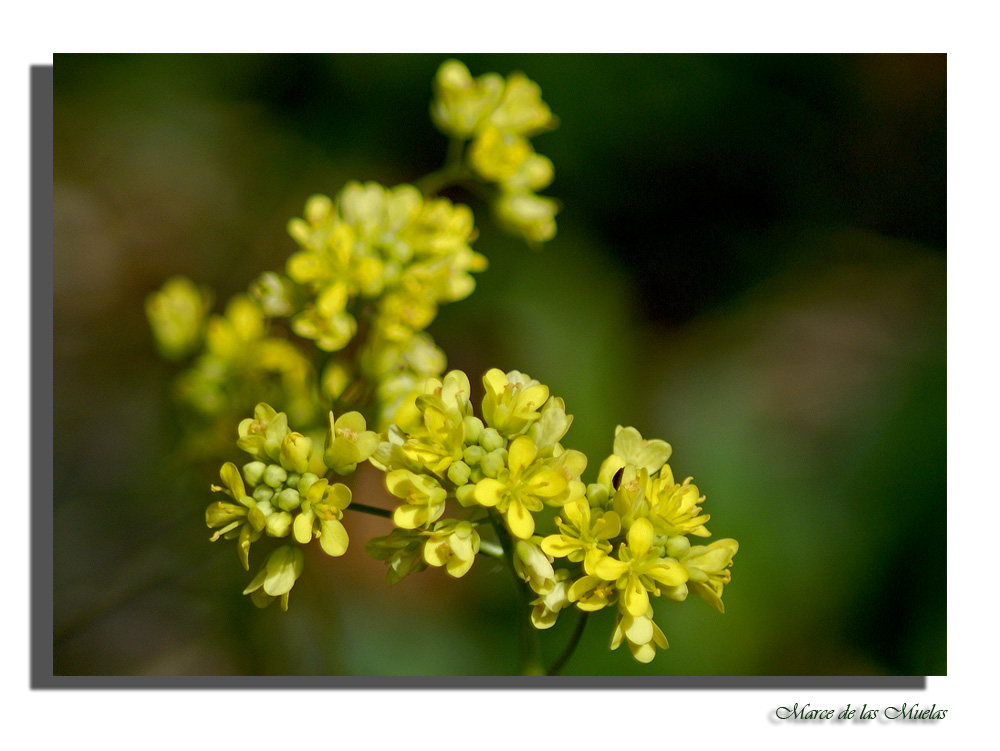 Flores pequeñas...10.