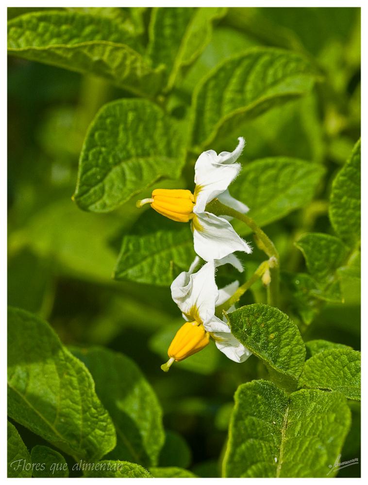 Flores que alimentan