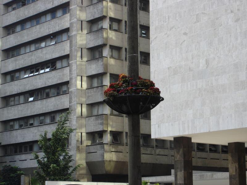 Flores Urbanas- Avenida Paulista SP Brasil