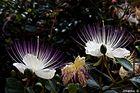 Flores_016