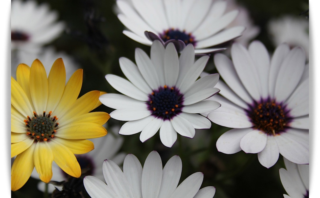 Floresssss
