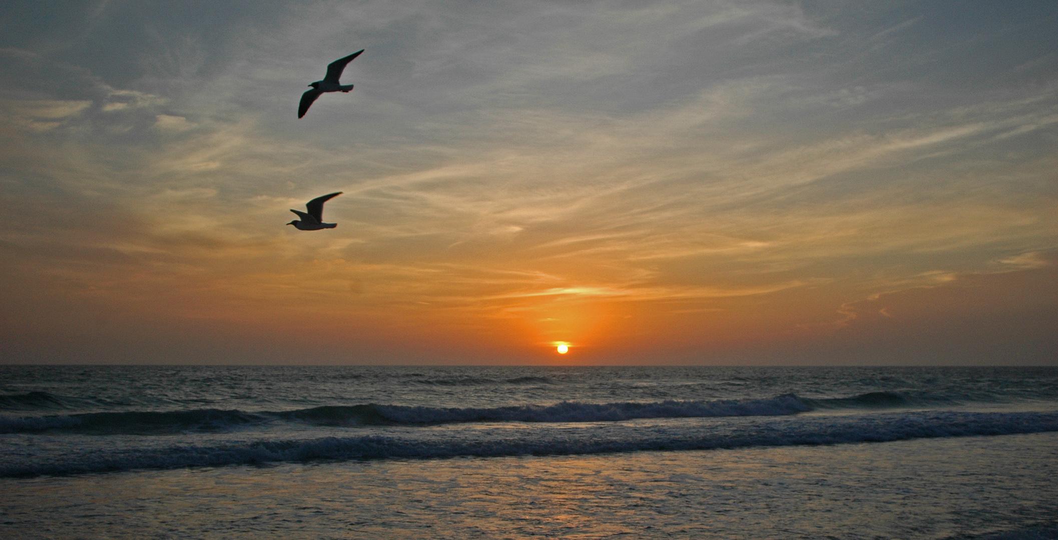 Florida - Anna-Maria-Island - mit Möwe
