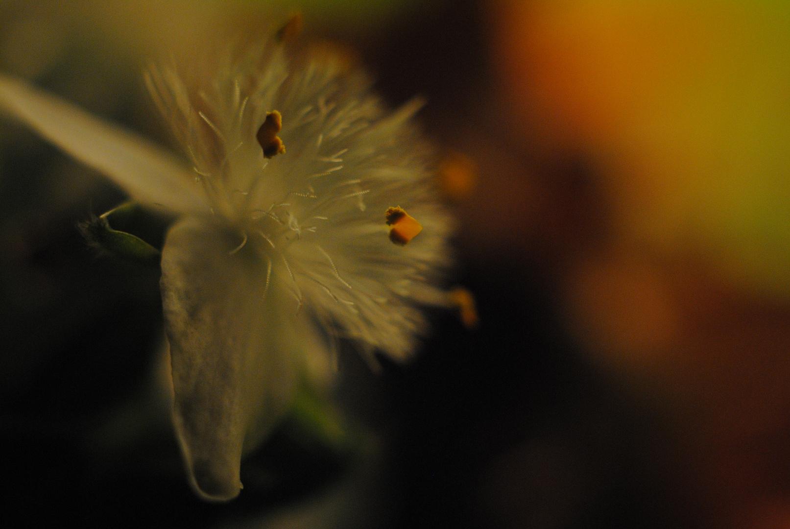 florida noche
