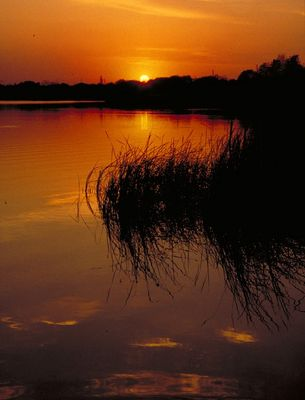 Florida Sunset....