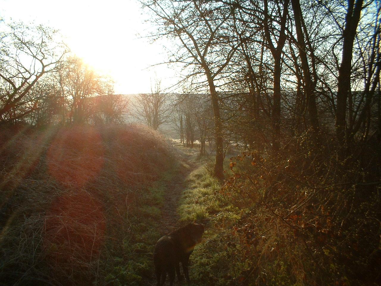 Floriffoux au petit matin