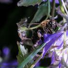 Flotte Biene 2