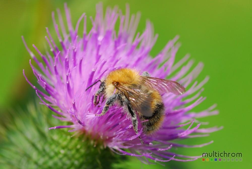 Flotte Biene