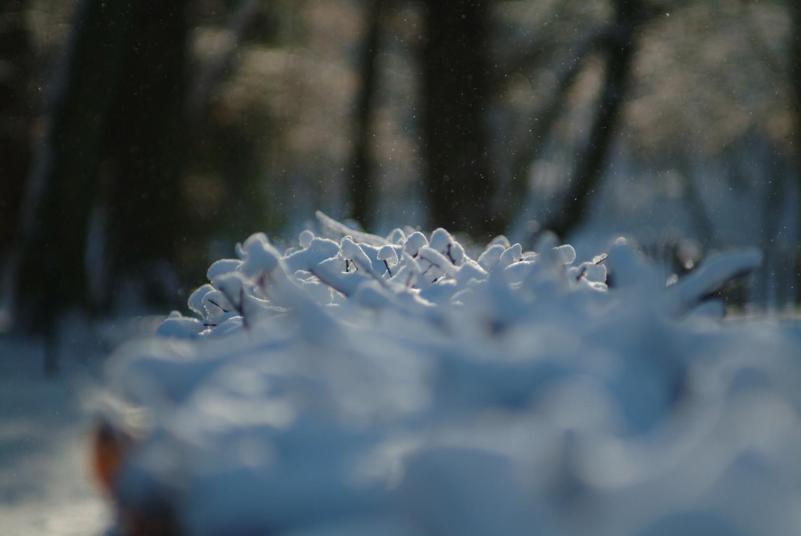 Flou neigeux 2