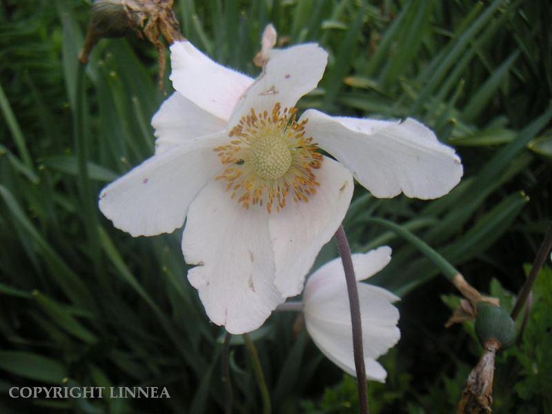Flower ^^.