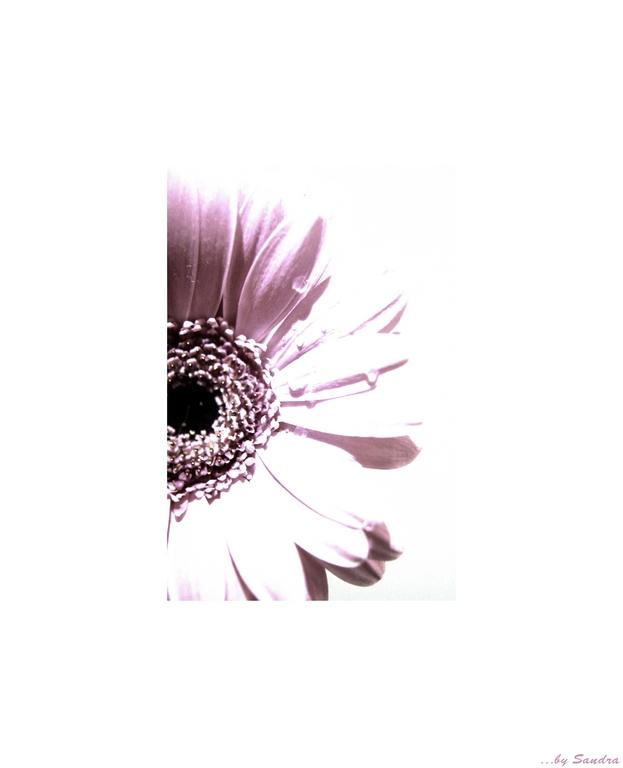 ~ *~ flower ~*~