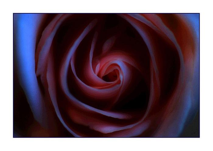"""flower # 113 """"Königin der Nacht"""""""