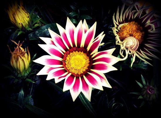 ..flower..