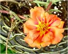 flower-1_4-007