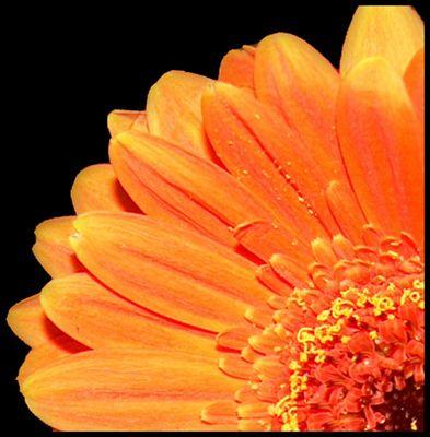 """""""Flower 1/4"""""""