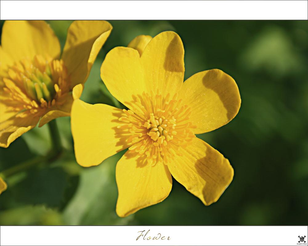 . Flower .
