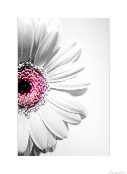 ~ ° flower 3° ~
