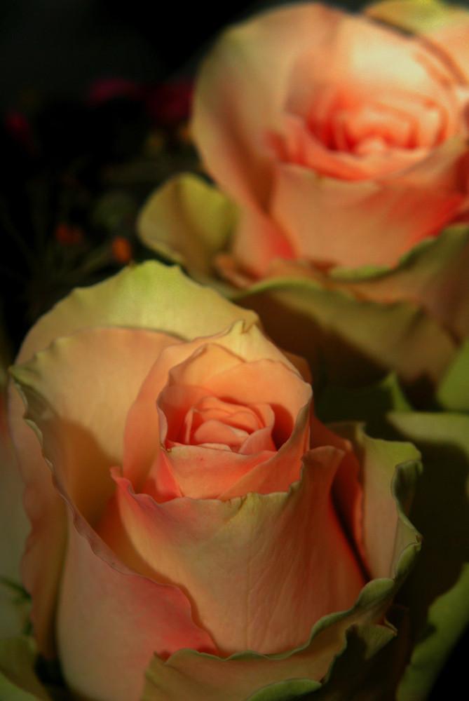 .: Flower :.