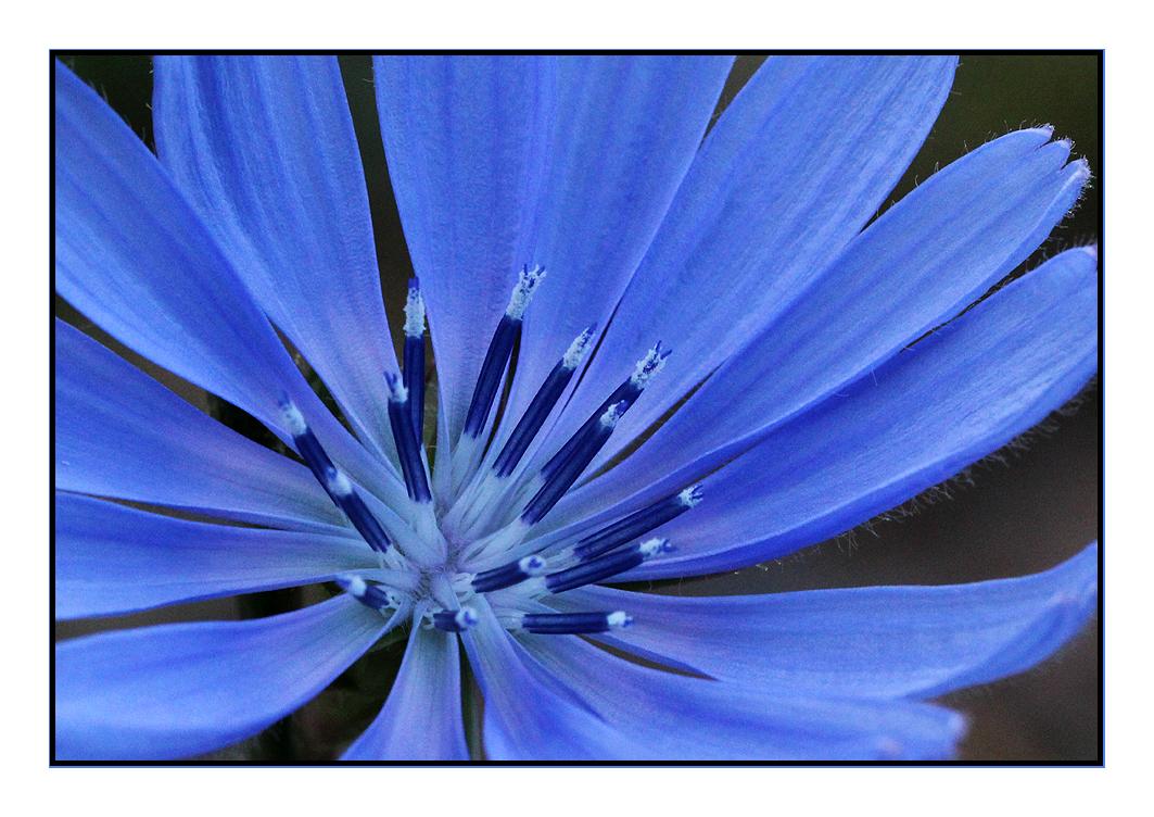 Flower # 4