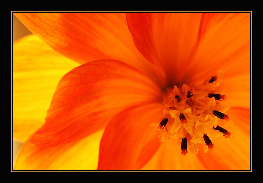 Flower # 7