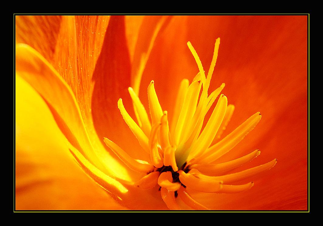 Flower # 8