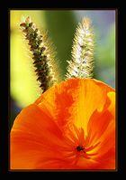 Flower # 9