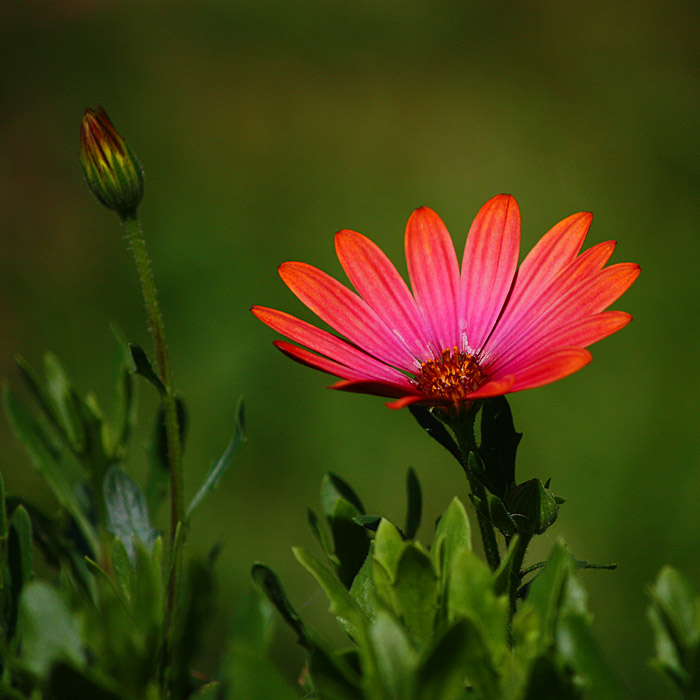 flower ...