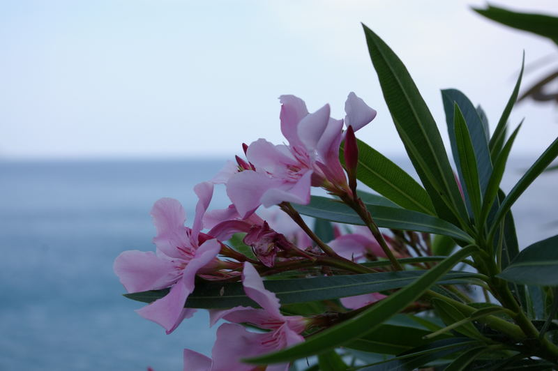 flower and the sea