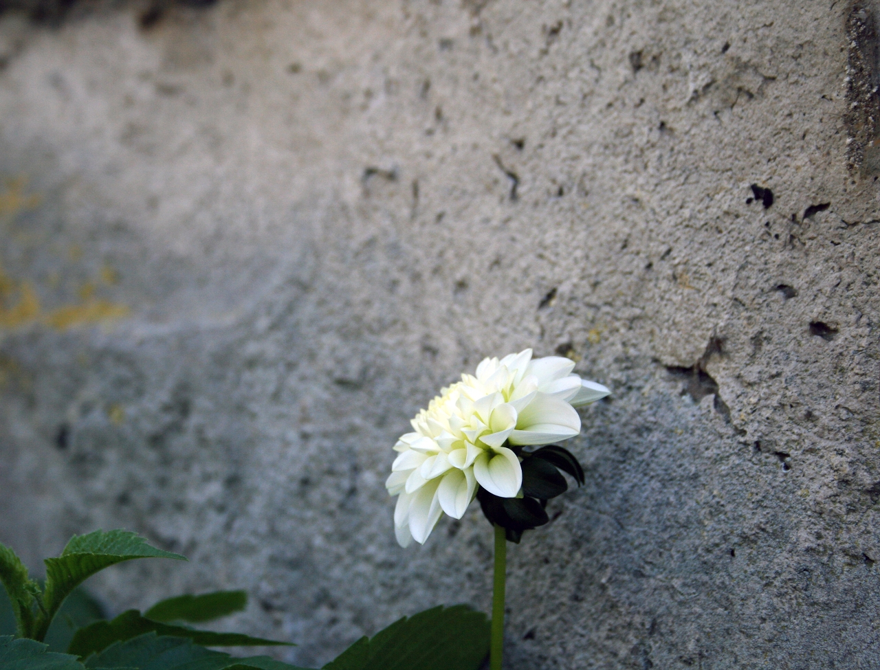 flower at the wall