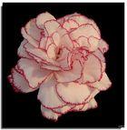 Flower..