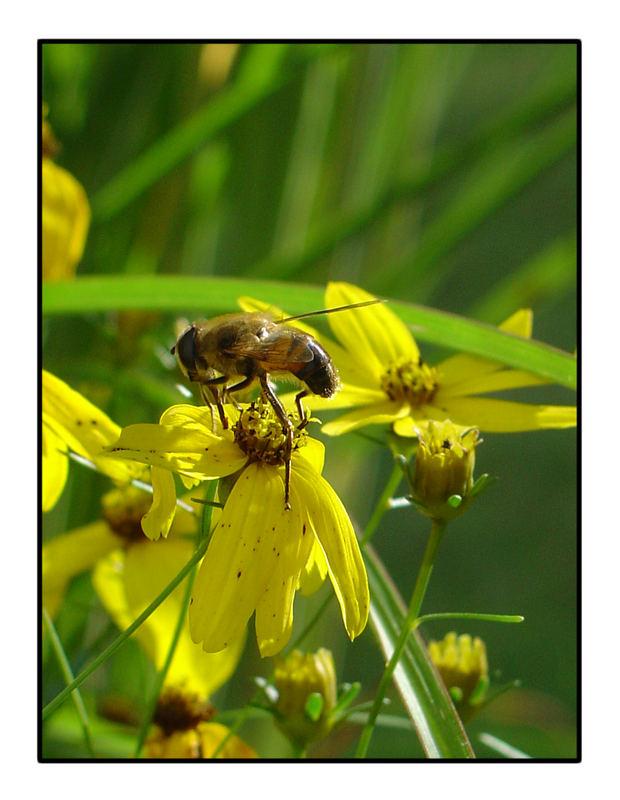 ....Flower & Bee....