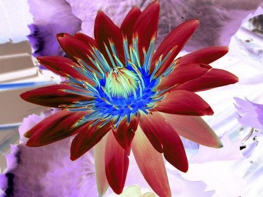 flower bot.garten (negative colorized) .o0°(for a girl called sarah)