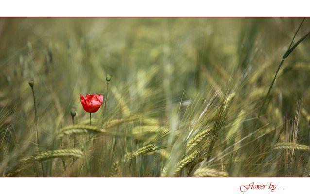 Flower by ...
