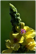Flower ColorBreak
