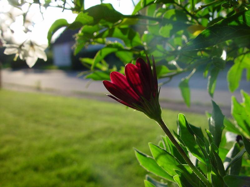 Flower :]